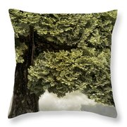 What Dreams Are Made Of Throw Pillow