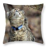 What Is That Throw Pillow by Susan Leggett