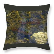 What You Looking At Throw Pillow