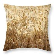 Wheat Field  Throw Pillow