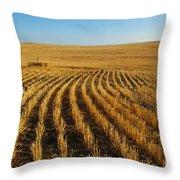 Wheat Rows Throw Pillow