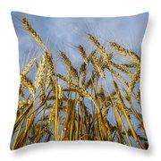 Wheat Standing Tall Throw Pillow
