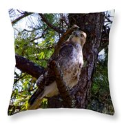 Where Did You Come From? Throw Pillow