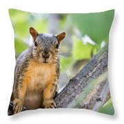 Where Is My Peanut Throw Pillow