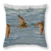 Whimbrel Trio In Flight Throw Pillow