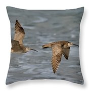 Whimbrels Flying Above Beach Throw Pillow
