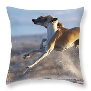 Whippet Dogs Fighting Throw Pillow
