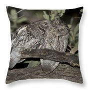 Whiskered Screech Owls Throw Pillow