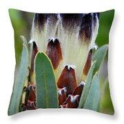 White And Brown Protea  Throw Pillow