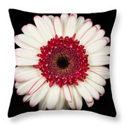 White And Red Gerbera Daisy Throw Pillow