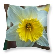 White And Yellow Daffodil Throw Pillow
