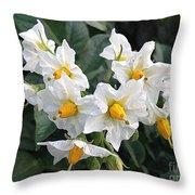 Garden Blossoms White And Yellow Garden Blossoms Throw Pillow