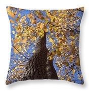 White Ash Throw Pillow