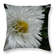 White Bachelor Buttons Throw Pillow
