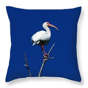 White Beauty Against Blue Throw Pillow