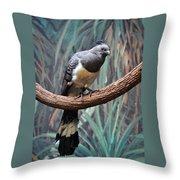 White-bellied Go-away-bird Throw Pillow