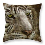 White Bengal Throw Pillow