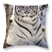 White Bengal Tiger, Forestry Farm Throw Pillow