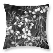 White Berries Throw Pillow