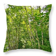 White Birch Along Rivier Du Nord Trail In The Laurentians-qc Throw Pillow