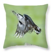White-breasted Nuthatch Flying With Food Throw Pillow