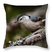 White-breasted Nuthatch Pictures 47 Throw Pillow