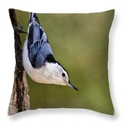 White-breasted Nuthatch Pictures 52 Throw Pillow