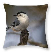 White-breasted Nuthatch Pictures 60 Throw Pillow