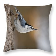 White-breasted Nuthatch Pictures 88 Throw Pillow
