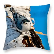 White-breasted Nuthatch Pictures 95 Throw Pillow