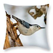 White-breasted Nuthatch Pictures 97 Throw Pillow