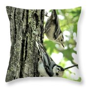 White Breasted Nuthatches Throw Pillow