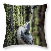 White Breasted Nuthatchs Throw Pillow