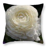 White Buttercup - Ranunculus Throw Pillow