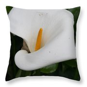 White Calla Lilly Throw Pillow