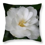 Snow White Camellia Throw Pillow
