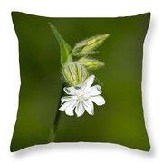 White Campion Flower Throw Pillow