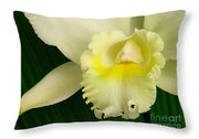 White Cattleya Orchid Throw Pillow