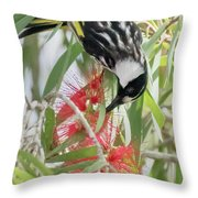 White-cheeked Honeyeater Feeding Throw Pillow