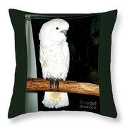 White Cockatiel-loreto Mx. Throw Pillow