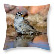 White-crowned Sparrow Bathing Throw Pillow