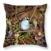 White Crowned Sparrow Throw Pillow