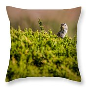 White-crowned Sparrow In A Bush Throw Pillow