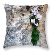 White Cyclamen Flowers Throw Pillow