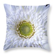 White Daisy Close Up Throw Pillow