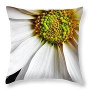 White Daisy Closeup Throw Pillow