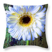 White Daisy With Green Wall Throw Pillow