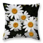 White Daisy's On The Rim Throw Pillow