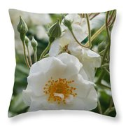 White Dog Rose And Buds Throw Pillow