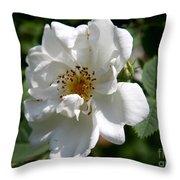White Dog Rose Throw Pillow